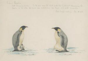 Dr Edward Wilson's Emperor Penguins watercolour