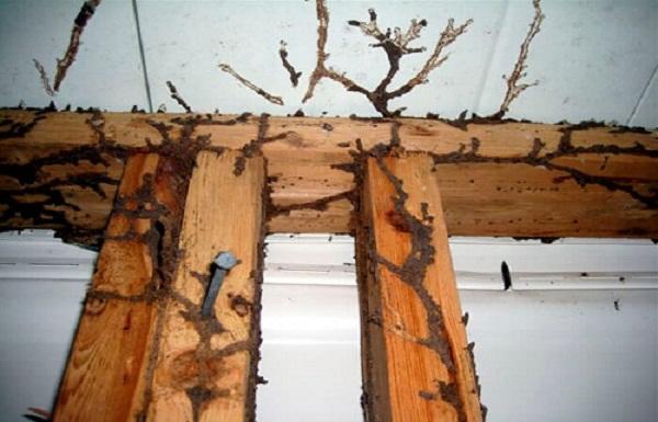 kerusakan bangunan akibat rayap