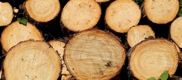 pengawetan kayu