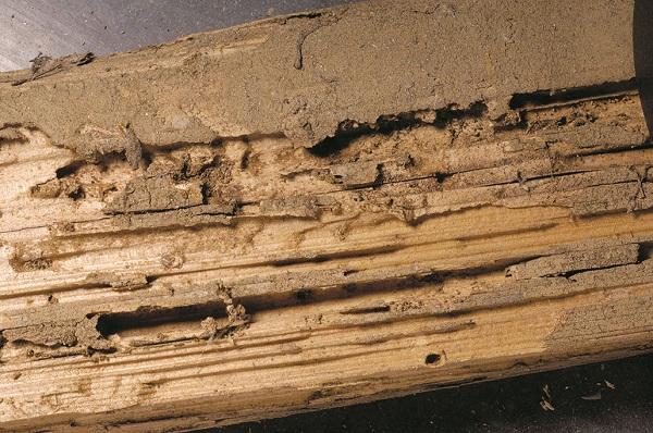 kayu busuk