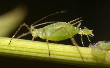 contoh insektisida sistemik