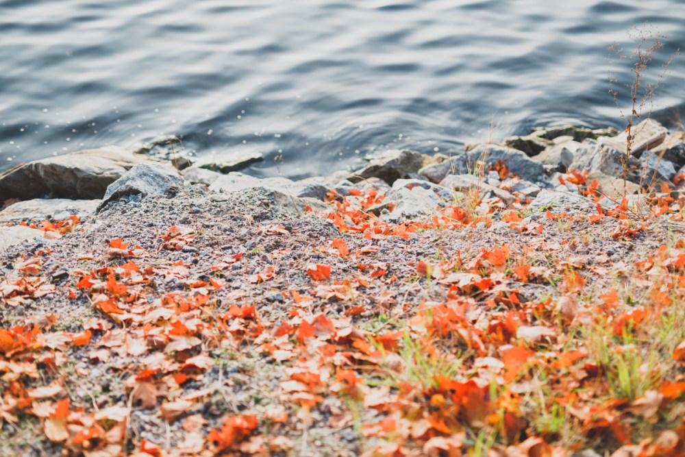 stockholm_rosehip_autumn-50