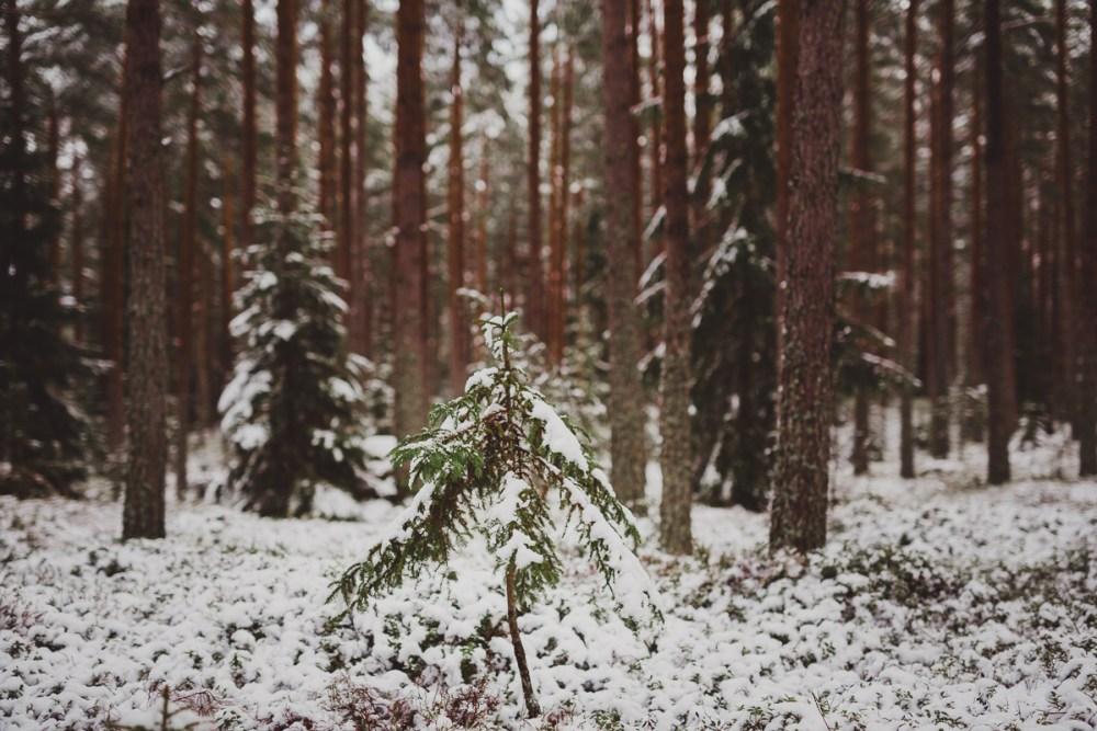 vinter_gullringen-15