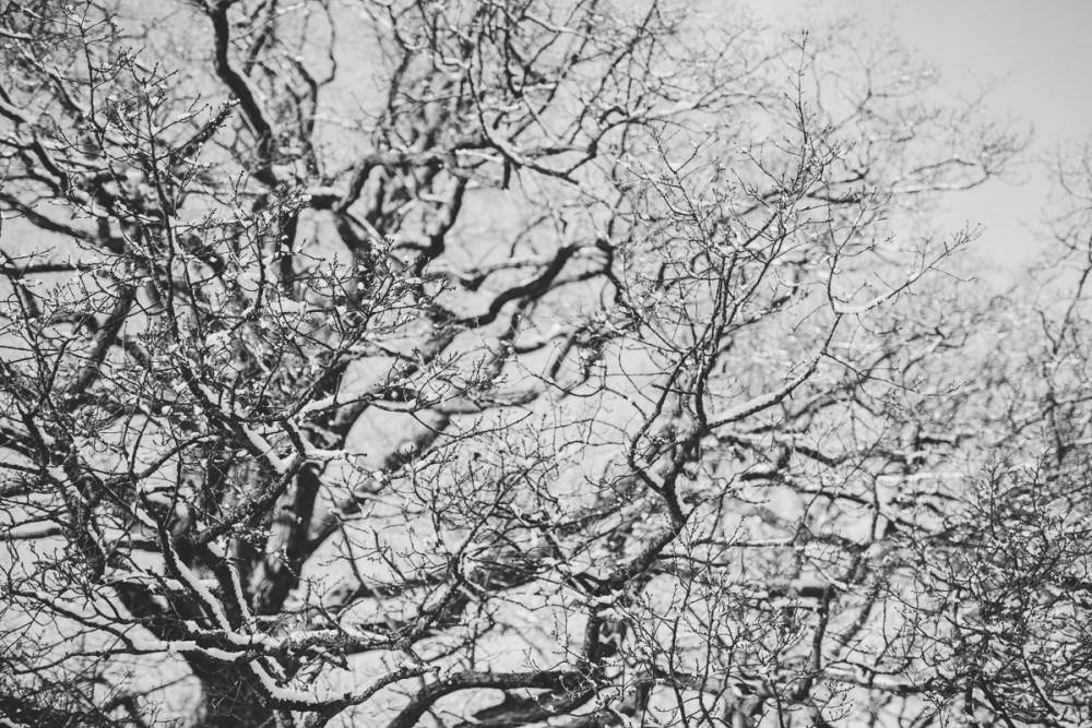 vinterbilder-9
