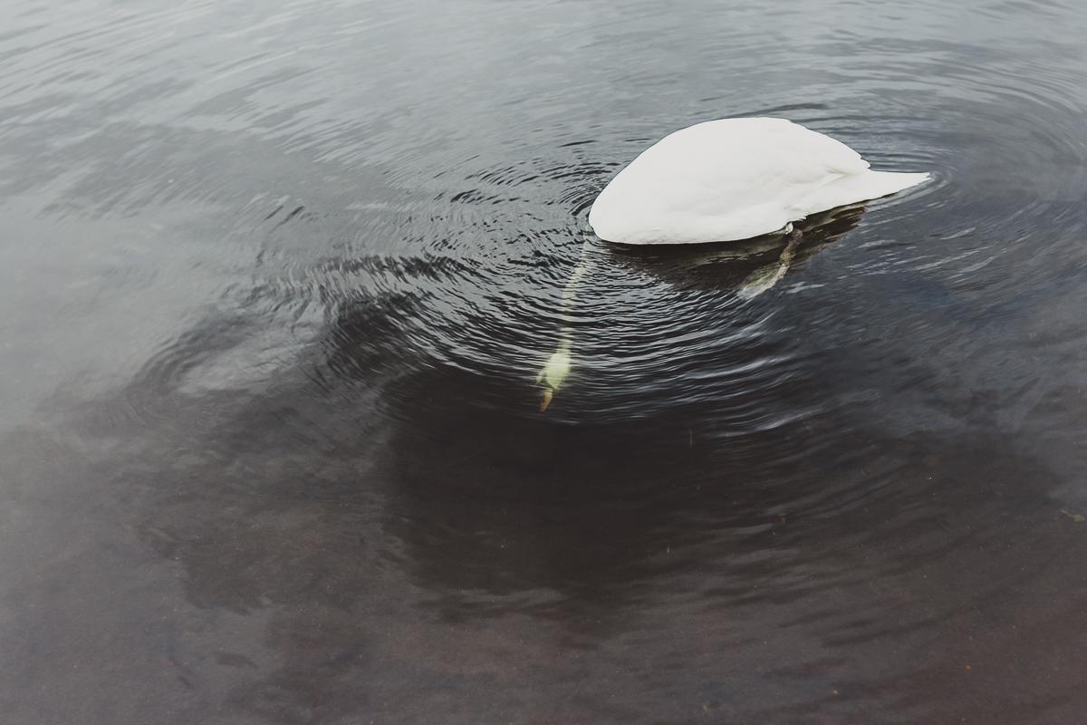 hydepark-29