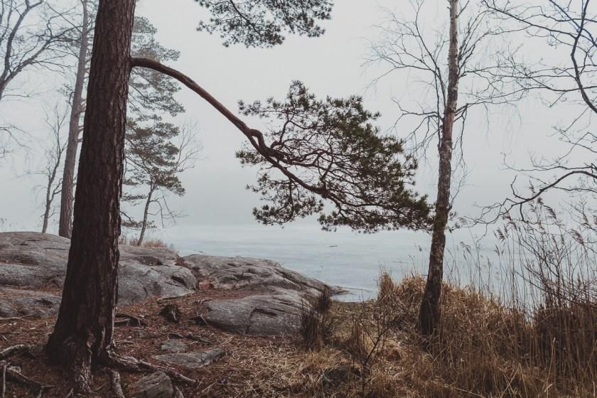 stockholm_antligenvilse_tyresta-39