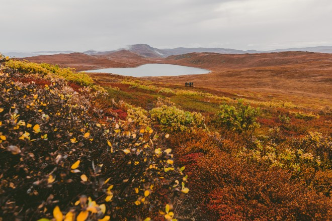 arktisk_oken_gronland-10