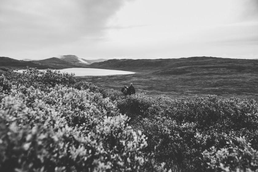 arktisk_oken_gronland-14