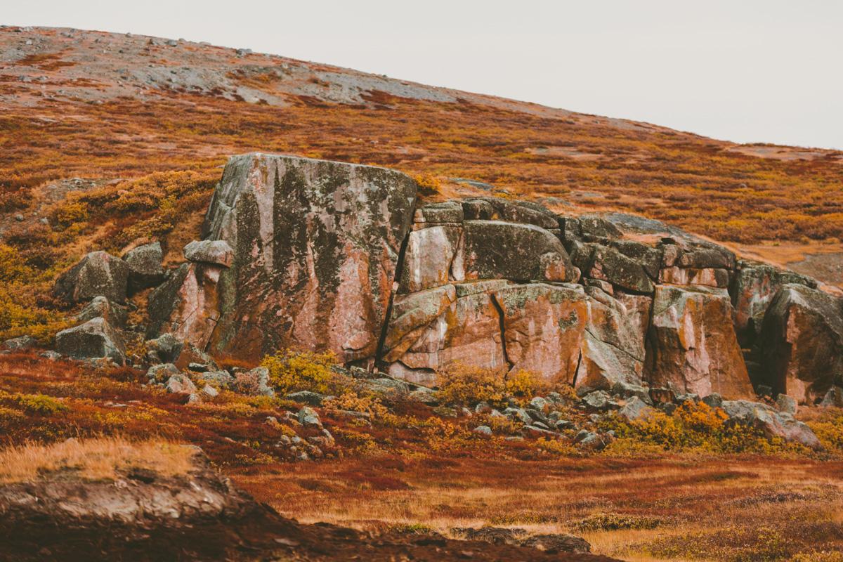 arktisk_oken_gronland-17