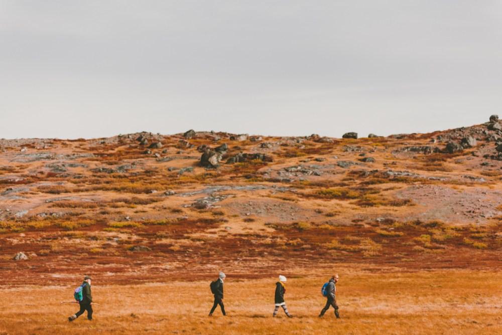 arktisk_oken_gronland-45