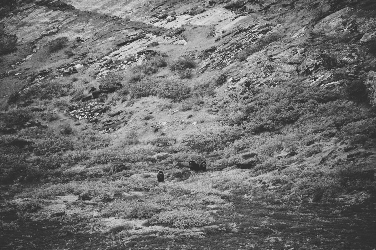 arktisk_oken_gronland-81