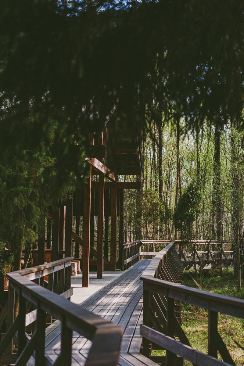 Låt själen läka i Store Mosse nationalpark