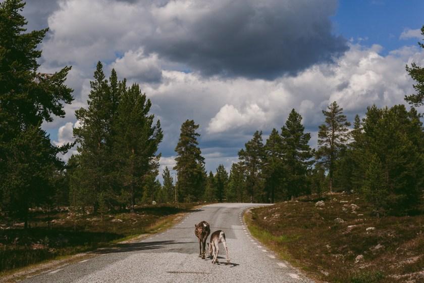 Min roadtrip runt Norrland