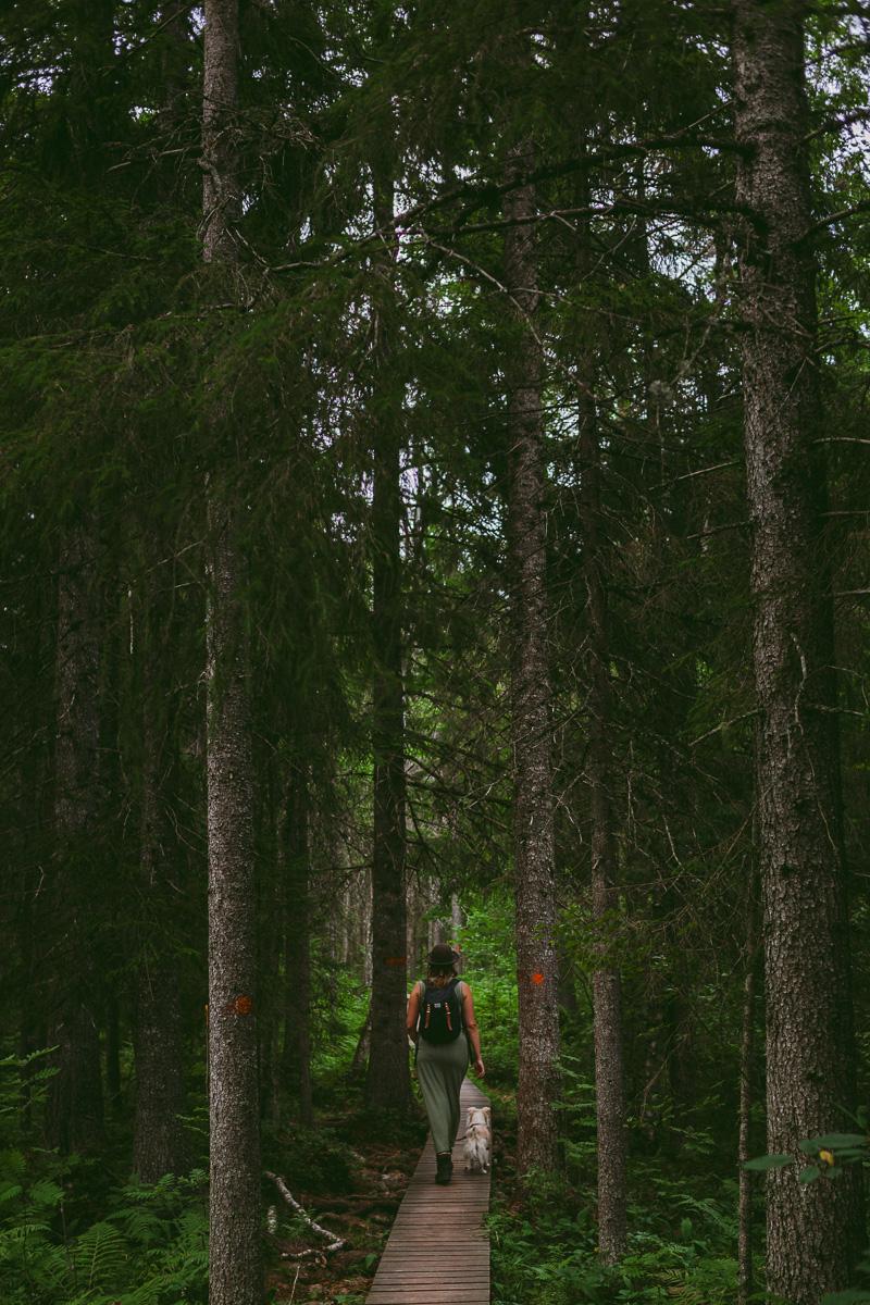 skuleskogen höga kusten