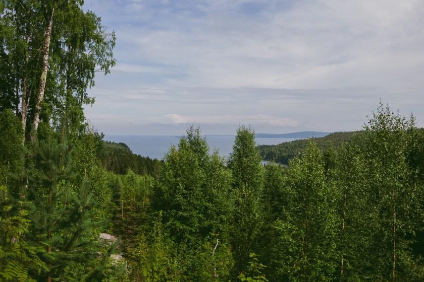 Bli jagad av vildvittrornas rop i Skuleskogen nationalpark