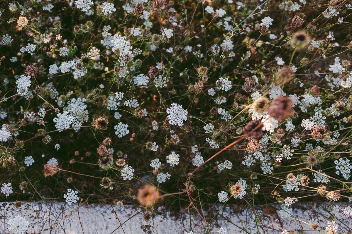 blommor italienska rivieran