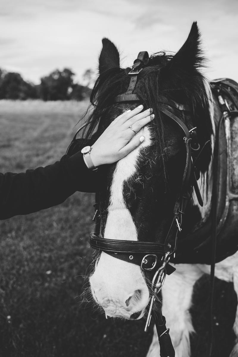 bravo clissman horse caravans