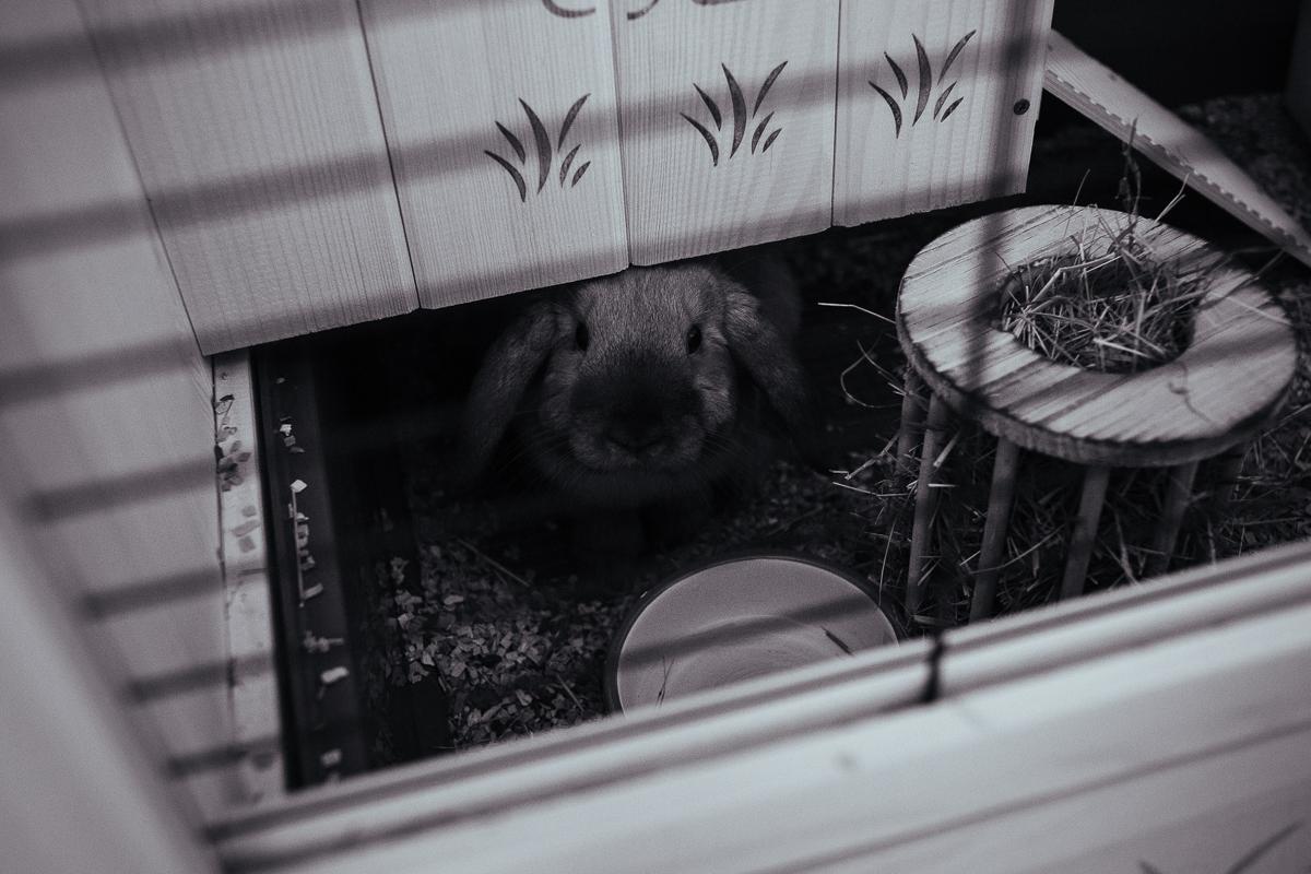 kaninbur lugn och ro för din kanin