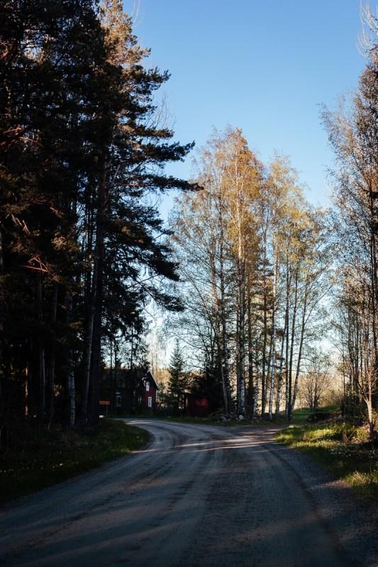 tierp skog