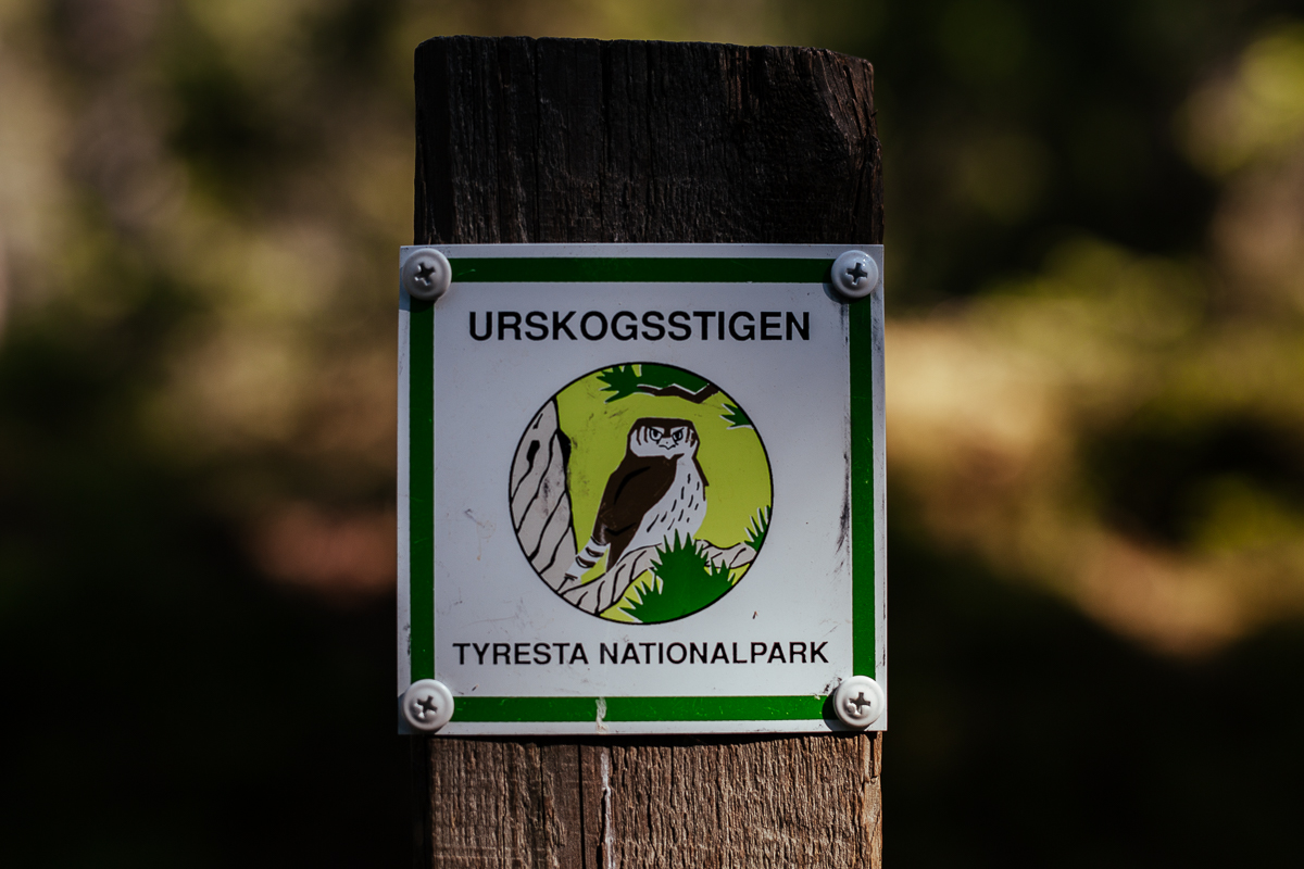 urskogsstigen tyresta nationalpark