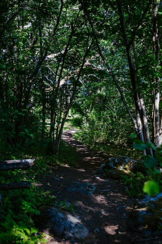 vandra på stig i naturreservat