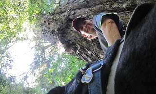 A low angled shot of ADNZ Ben (foreground) with Antnz behind Ben, looking up a Totara tree
