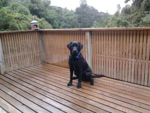 ADNZ Ben sitting on a wooden deck looking at camera