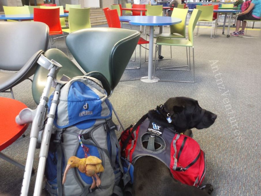 A picture of crutches, a pack with Kaha (Kiwi Beanie Baby) and ADNZ Ben in the UCoL Atrium