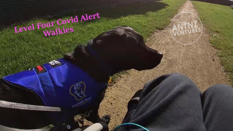 "On the top left is the lettering ""Level Four Covid Alert Walkies"". Below the lettering stands ADNZ Raven to her waist, wearing her blue ADNZ jacket looking across frame. Antnz blue sweat pants are seen to the right of Raven, you can just see Antnz wheelchair."