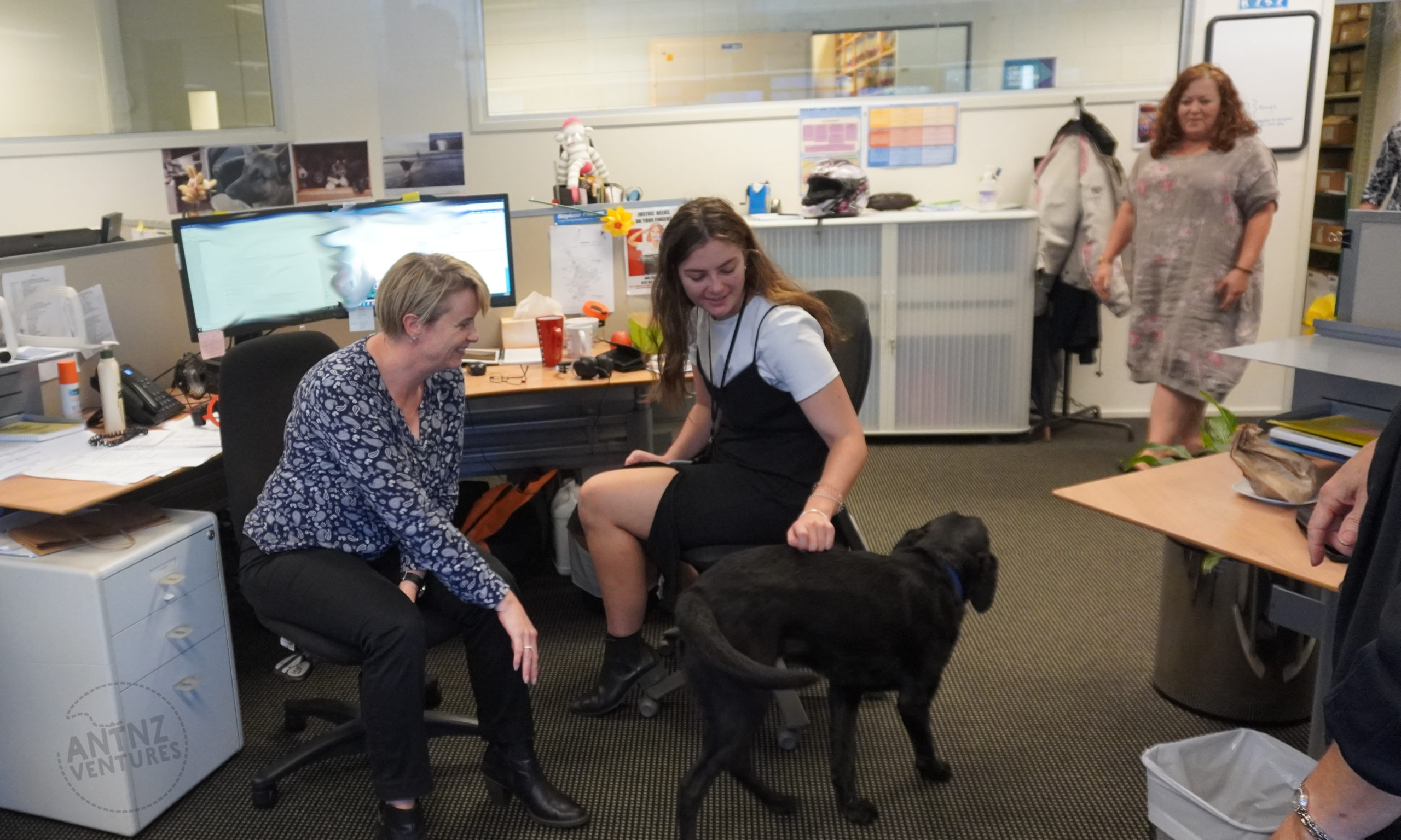 A photo taken in an office setting. There are 2 women in the middle and left of frame sitting in front of a computer. These woman are both looking at, and are having pats with ADNZ Raven. ADNZ Raven however has seen a woman appear (out of focal range) through a door on the top right of frame. Raven is obviously moving towards this woman.