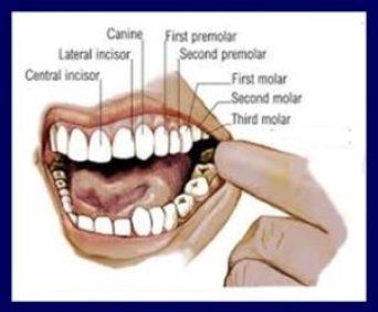 Messaggi del corpo I denti - La casa