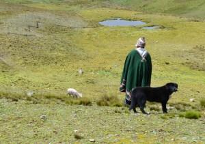 Lama herder Bolivia