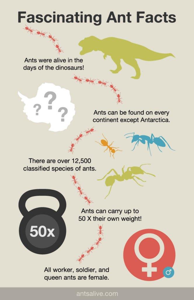 Twenty Ant Facts