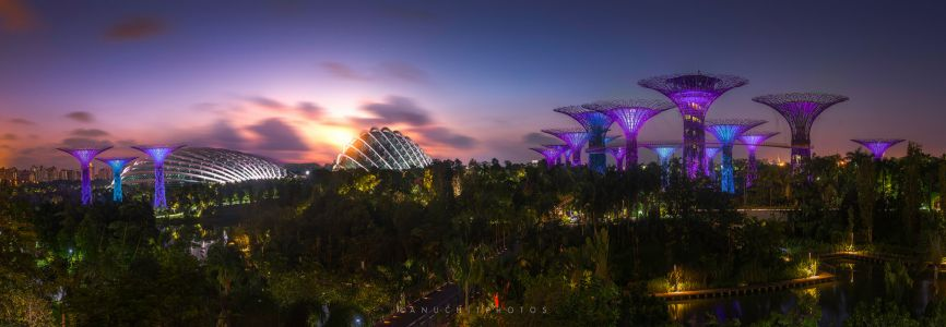Morning Garden by the Bay