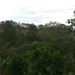 terreno-residencial-en-venta-en-jarabacoa-jarabacoa-10193