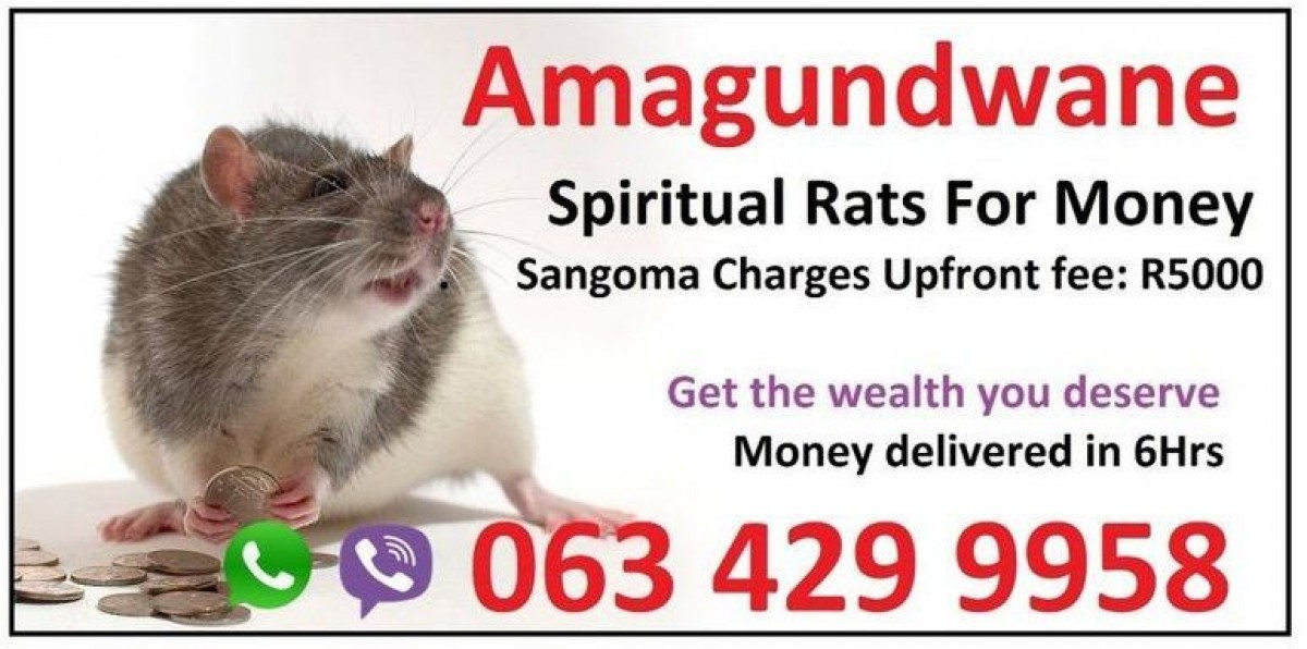 people-get-spiritual-rats-with-money-spell-caster-usa-new-york-0634299958_1