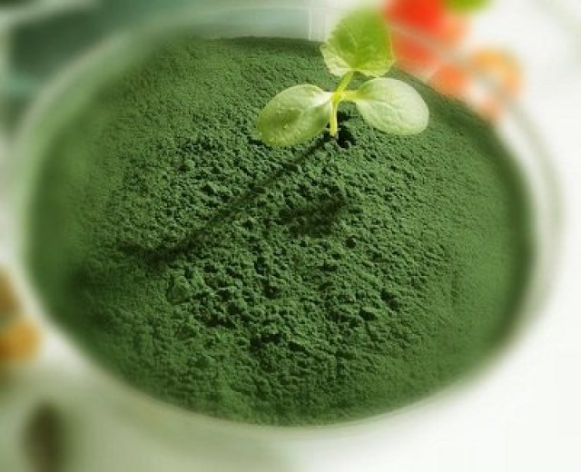 spirulina-leaves
