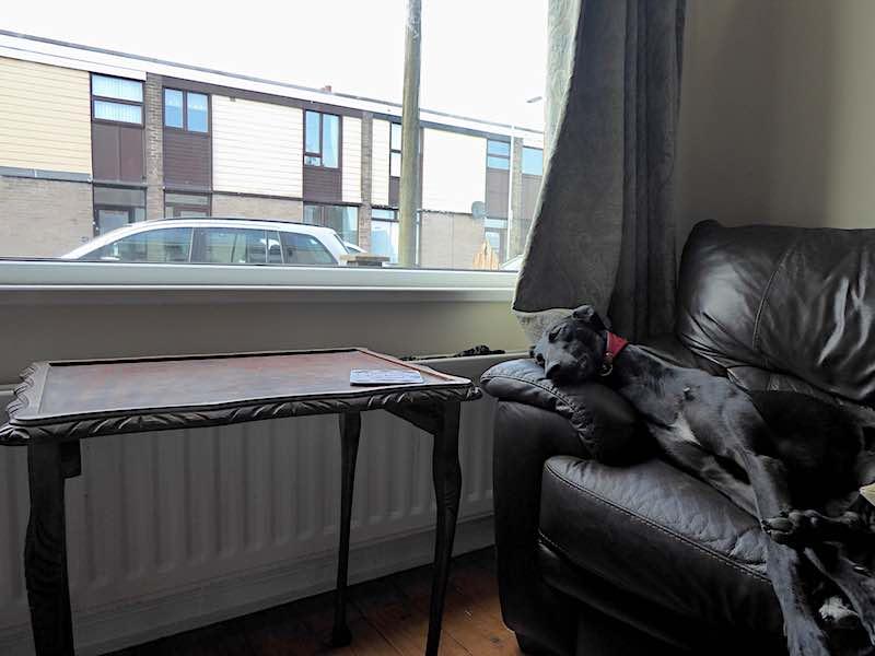 dog on sofa asleep