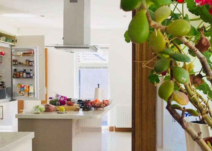 kitchen with money plant