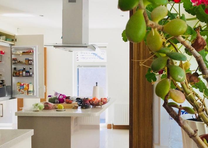 kitchen with money plant