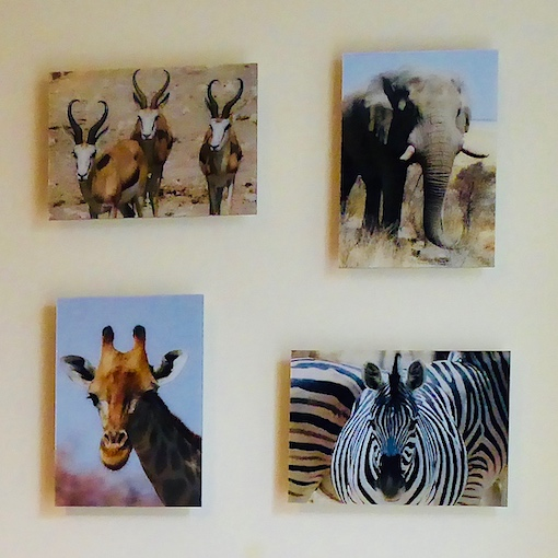 4 safari animal photos  on wall