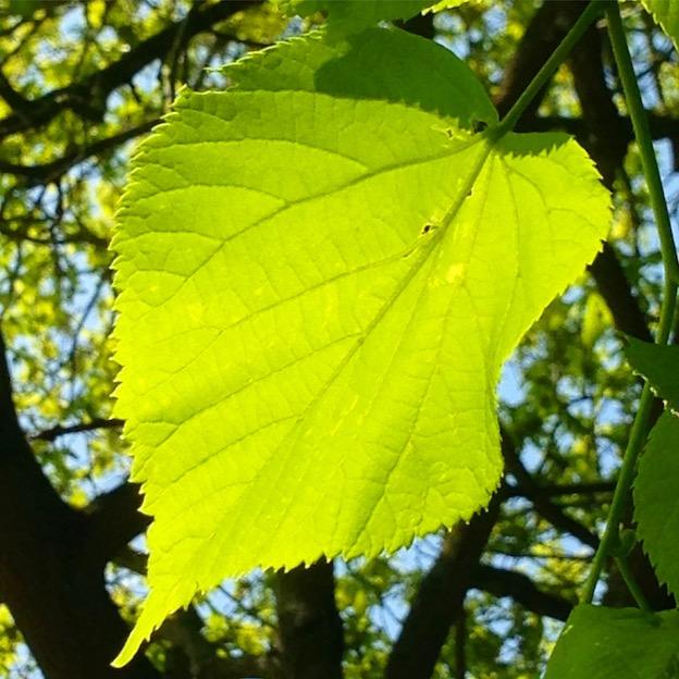 single green leaf on tree