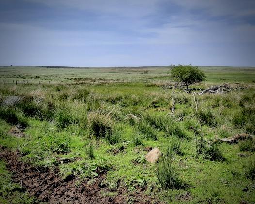 bogland in country fields