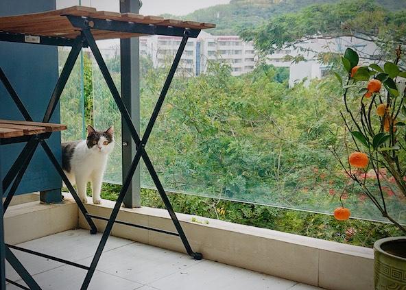 Cat on balcony Shenzhen