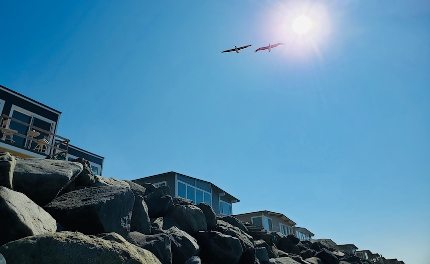 two seagulls above beach houses