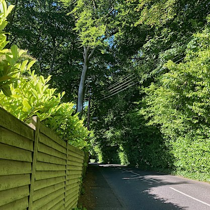 walking on road with green fence and trees