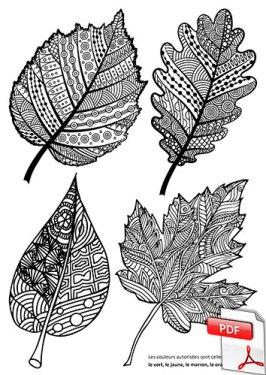 Feuilles d'automne en zentangle