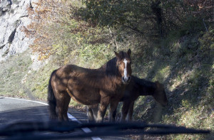 Horses in the Road