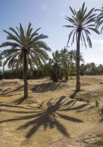 Palm shadows on the BMC course