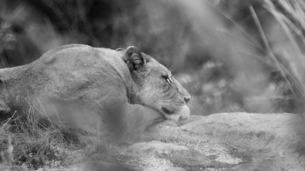 Safaridestinationer: the basics